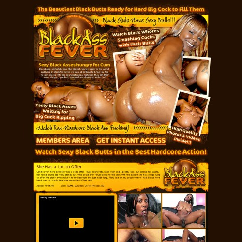 Black Ass Fever 100